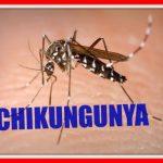 Bupati Bogor Instruksikan Jajarannya Tangani Chikungunya