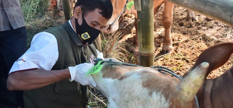 Pemkab Bogor Turunkan Petugas Periksa Kesehatan Hewan Kurban di Tempat penjualan Hewan kurban